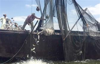 إزالة ١٦ قفصًا سمكيًا من نهر النيل فرع رشيد في نطاق مركز دسوق