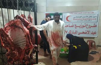 ذبح 123 عجلا وتوزيع 4989 كجم لحوم على الأسر الأكثر احتياجا بقنا