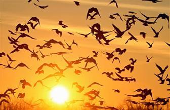 270 نوعًا من الطيور المهاجرة تلجأ لمحمية الزرانيق بشمال سيناء
