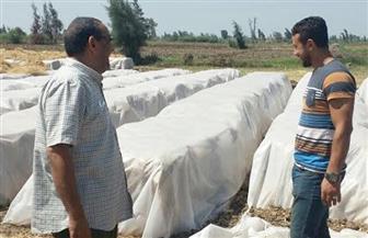 """"""" بيئة وسط الدلتا"""" تعتمد 420 طن أعلاف وسماد عضوي من قش الأرز"""