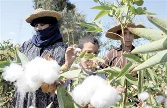"""""""الزراعة"""" تصدر نشرة بالتوصيات الفنية لمزارعي محصول القطن"""