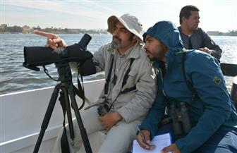 البيئة تعلن الانتهاء من أكبر برنامج لرصد ودراسة الطيور المائية المهاجرة | صور