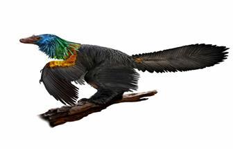 اكتشاف ديناصور صيني بريش ملون مثل الطائر الطنان