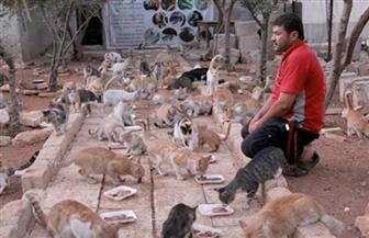 حيوانات حلب تعاني صدمة نفسية