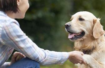 الكلاب تساعد مرضى السكري قبل أن يصابوا بنوبة إغماء
