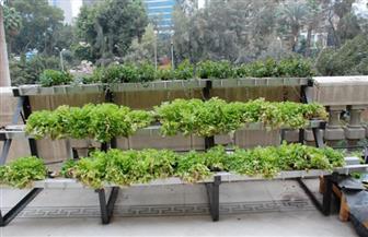 """""""الزراعة"""" تتبني نموذجا بيئيا مبتكرا لزراعة الأسطح بالشرفة الرئيسية فى الديوان العام"""