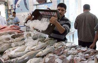 استقرار أسعار السمك  في سوق العبور