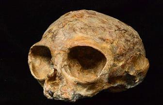 جمجمة رضيعة عمرها 11500 عام تفسر كيف ومتى وصل البشر إلى الأمريكتين؟