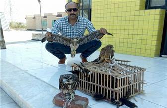 باحثو محمية أشتوم الجميل ينجحون في منع الصيد الجائر وإنقاذ صقور الشاهين | صور