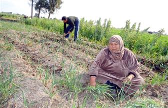 في يومها العالمي.. المرأة الريفية العمود الفقري بالمجتمع .. 16 ساعة عمل بالمنزل والحقل