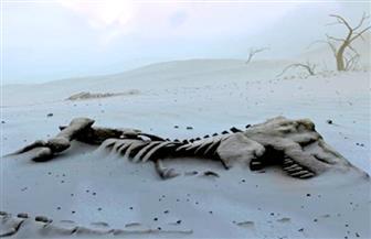 تجارة تدر ملايين الدولارات.. مغاربة يبحثون عن الديناصورات والحيوانات المنقرضة