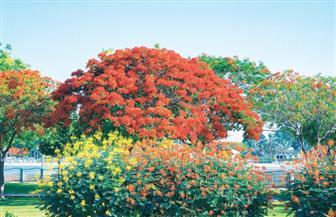 دراسة: زيادة تنوع الأشجار يؤثر إيجابا على التغير المناخي