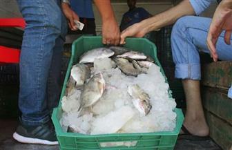 طرح أسماك البلطي بـ 12 جنيها للكيلو في الغردقة | صور
