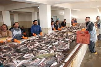 الزراعة تستجيب للصيادين وتتجه لخفض القيمة الإيجارية للمزارع السمكية | صور