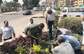 نائب محافظ القاهرة: بدأنا مشروعا لزراعة مليون شجرة بالعاصمة