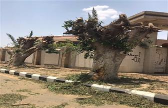 رئيس هيئة النظافة: قطع الأشجار الخطرة بالشوارع والمدارس للحفاظ على حياة المواطنين