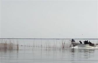 محافظ كفرالشيخ يتابع حملة إزالة التعديات على بحيرة البرلس|صور