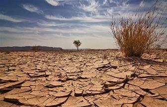 """""""أكساد"""" تنفذ المرحلة الأولي من الأحزمة الخضراء في مصر و5 دول عربية"""