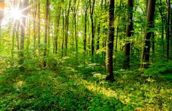 افتتاح المؤتمر الدولي للغابات المزروعة في بكين