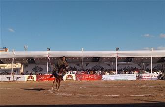 اختتام مهرجان الغربية للخيول العربية السبت المقبل