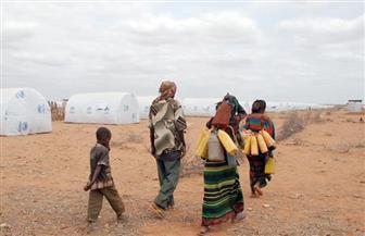 الحكومة البريطانية تحث زامبيا لإعلان حالة الطوارئ بعد أسوأ حالة جفاف منذ 1981