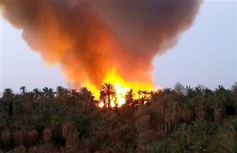 """مليونا جنيه تعويضات المتضررين من حريق الراشدة.. و""""الزراعة"""" تدرس إعادة تأهيل النخيل"""