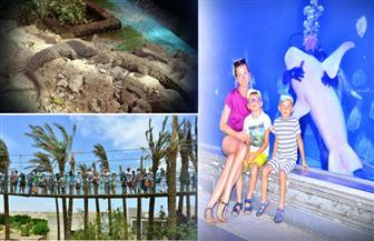 الأكواريوم.. أول متحف مائي يضع الغردقة ضمن قائمة أفضل المدن السياحية| صور