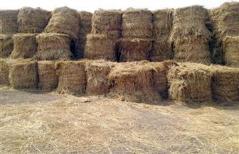 تجميع 4841 طن قش أرز في البحيرة.. ووزيرة البيئة: المخلفات الزراعية سلعة لها عرض وطلب