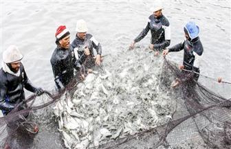 حقيقة وقف تنفيذ مشروع الاستزراع السمكي شرق التفريعة