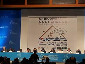 أمينة الأمم المتحدة للمناخ: لنتكاتف ونتكامل لإنجاز التزاماتنا البيئية قبل 2020