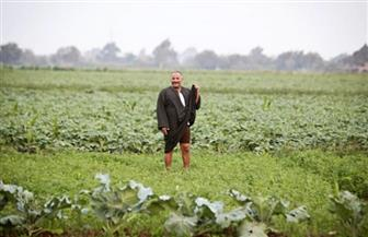 الحكومة تنفي استخدام مواد كيماوية ضارة لزيادة إنتاجية المحاصيل