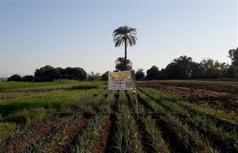 قصص نجاح صغار المزارعين بقنا في مشروع برايم| صور