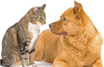"""""""الزراعة"""" توضح حقيقة تصدير الكلاب والقطط"""