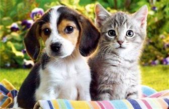 """رسميا """"الزراعة"""" ترد: 726 كلبا وقطة خرجوا من البلاد بصحبة مالكيها خلال2018. ولا توجد حالات تصدير"""
