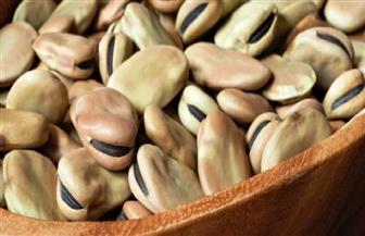 غرفة الحبوب: مصر تأكل 700 ألف طن فول سنويا.. واستهلاك رمضان يعادل 3 أشهر