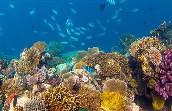 عرض نموذج لدور المجتمع المدني في حماية الثدييات البحرية بمؤتمر التنوع البيولوجي