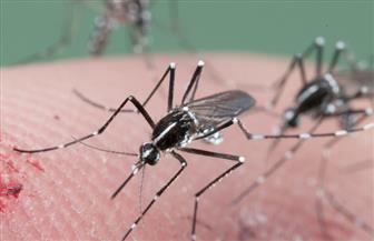"""لمكافحة انتشار البعوض.. """"صحة الإسكندرية"""" تطبق خطة الترصد الحشري"""
