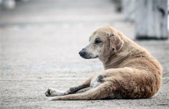 """القبض على ٤ أشخاص ظهروا في فيديو أثناء ضربهم """"كلب"""" بسلاح أبيض بالمطرية"""
