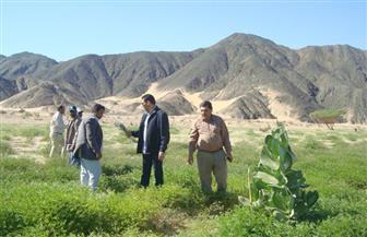 جولات ميدانية لمكافحة الجراد بالصحراء الجنوبية الشرقية بعد هطول الأمطار والسيول