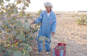 تدريب 40 مزارعا بدويًا لتحسين صفات المنتجات الزراعية بمطروح