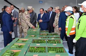 محسن البلتاجي: مشروع الصوب الزراعية يغطي الاحتياج المحلي ويضبط الأسعار بالأسواق