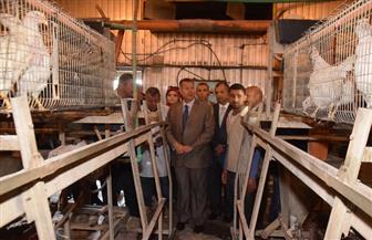 محافظ بني سويف يتفقد مشروعات إنتاج الدواجن.. ويؤكد الحصول على 8 ملايين جنيه دعما | صور