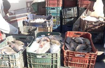 تموين الأقصر تعلن وصول أسماك طازجة بسعر 12 جنيها للكيلو | صور