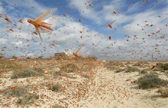 """""""المحافظين"""" محذرا من هجوم الجراد الصحراوي: سيفتك بالمحاصيل.. وعلى الحكومة اتخاذ التدابير اللازمة"""