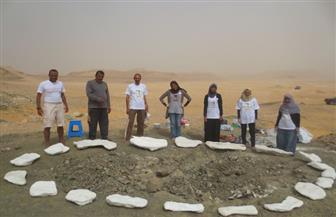 """""""تعليم النواب"""" تستعد لتكريم مكتشفي الديناصور المصري"""