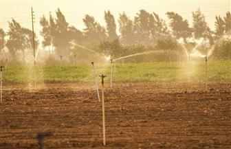 أكاديميون: التنقيط والمحاصيل البديلة يوفران مليارات الأمتار المهدرة من المياه   صور