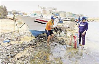 """""""شباب بتحب مصر"""" تعرض فيلما وثائقيا حول مجهوداتها في إعلان جزر البحر الأحمر خالية من البلاستيك"""