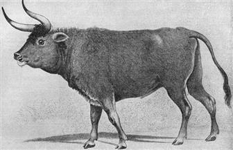 """علماء ألمان يسعون لاستعادة حيوان """"الأرخص"""" المنقرض  أو نوع  يشبهه"""