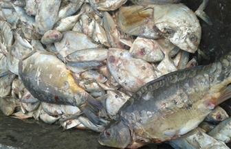 ضبط أسماك فاسدة بالسلام | صور