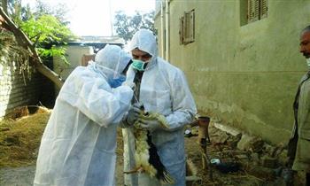 تحصين 326 ألف و717 طائرا ضد مرض إنفلونزا الطيور بالشرقية